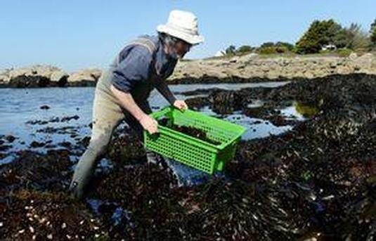 les-algues-et-leurs-bienfaits-mediatheque-lorient-groix-lorient-morbihan-bretagne-sud-39902