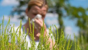 pollen-allergie-niesen